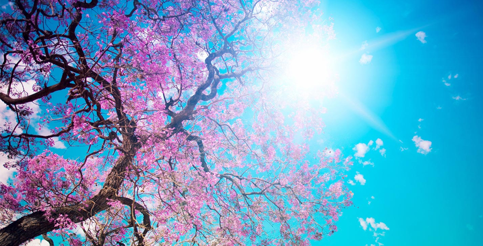 7 canções para a estação das flores