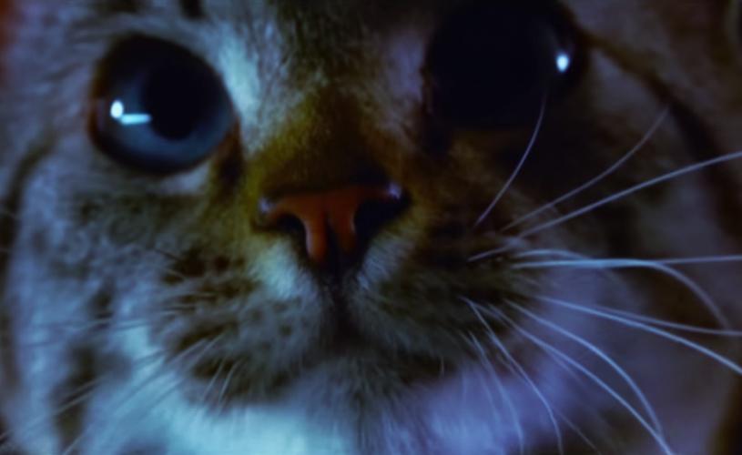 """Marretas e Mastodon no vídeo de """"Asleep In The Deep"""""""